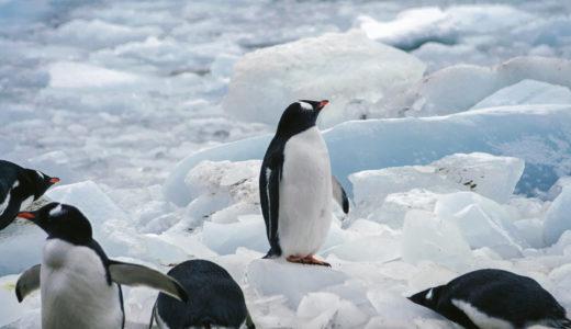 【南極大陸準備編④】ラストミニッツって何?ベストシーズンはいつ?南極クルーズの予約について