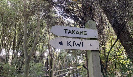 【ニュージーランド編⑤】NZの国鳥キウイに手軽に会える!クライストチャーチ空港から車ですぐの動物保護区