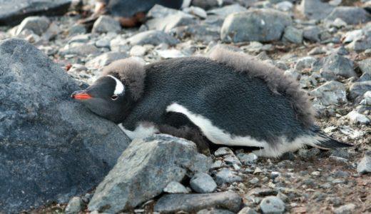 【必読】南極への行き方完全攻略!南極クルーズの料金の相場、ラストミニッツ、船の選び方、オススメのツアー会社、全部教えます!