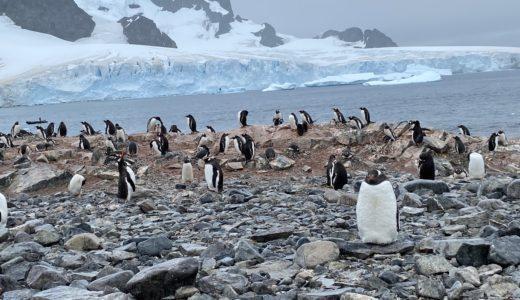 【南極クルーズ編⑤】大陸側へ初上陸!猛烈に可愛いペンギンの虜に